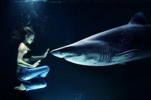woman, hai, great white shark